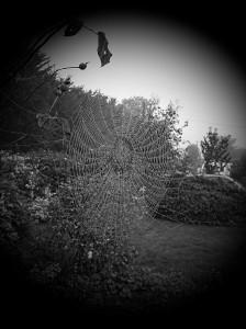 Autumn Web 2