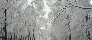 hemburywoodsinwinterjohnwales